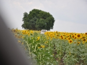 49_parallel_2009-08-02_039