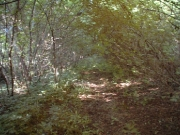 49_parallel_2009-08-04_033