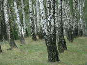 49_parallel_2009-08-06_020